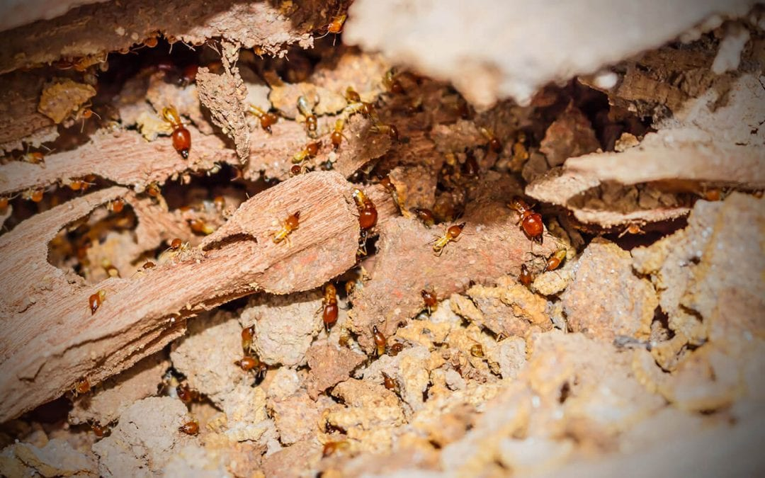 Common wood-destroying insects