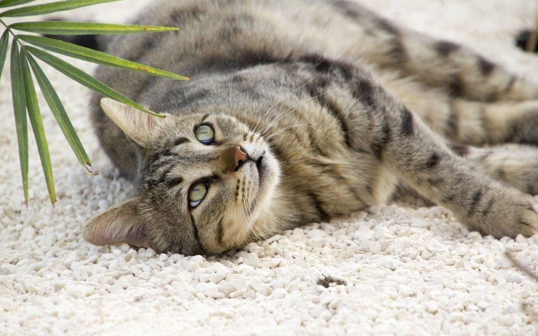 Use these cleaning tips for pet owners to keep your house tidy